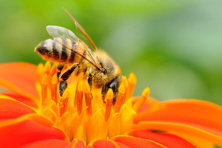 Bienenvölker am Steinertsberg