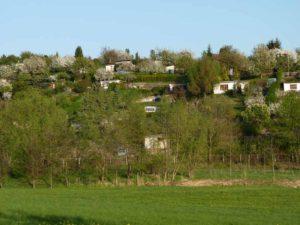 Frühling am Steinertsberg