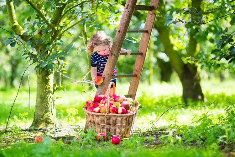 Gartentipps August